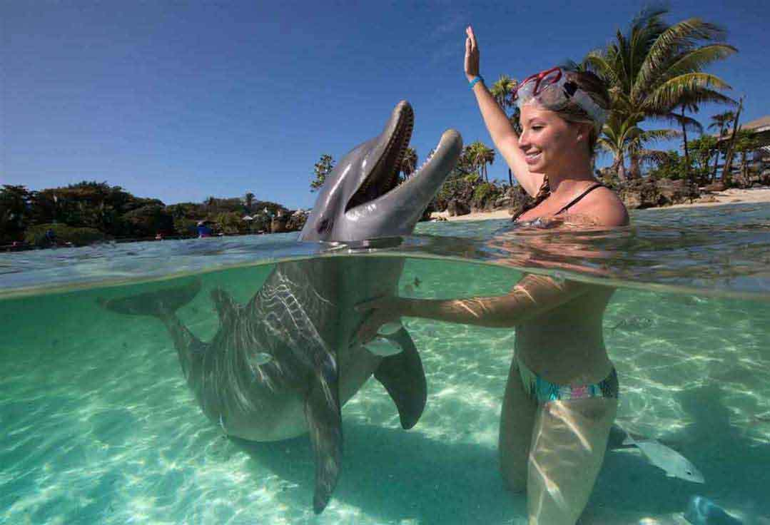 a girl plays with a dolphin during a Key West snorkeling trip