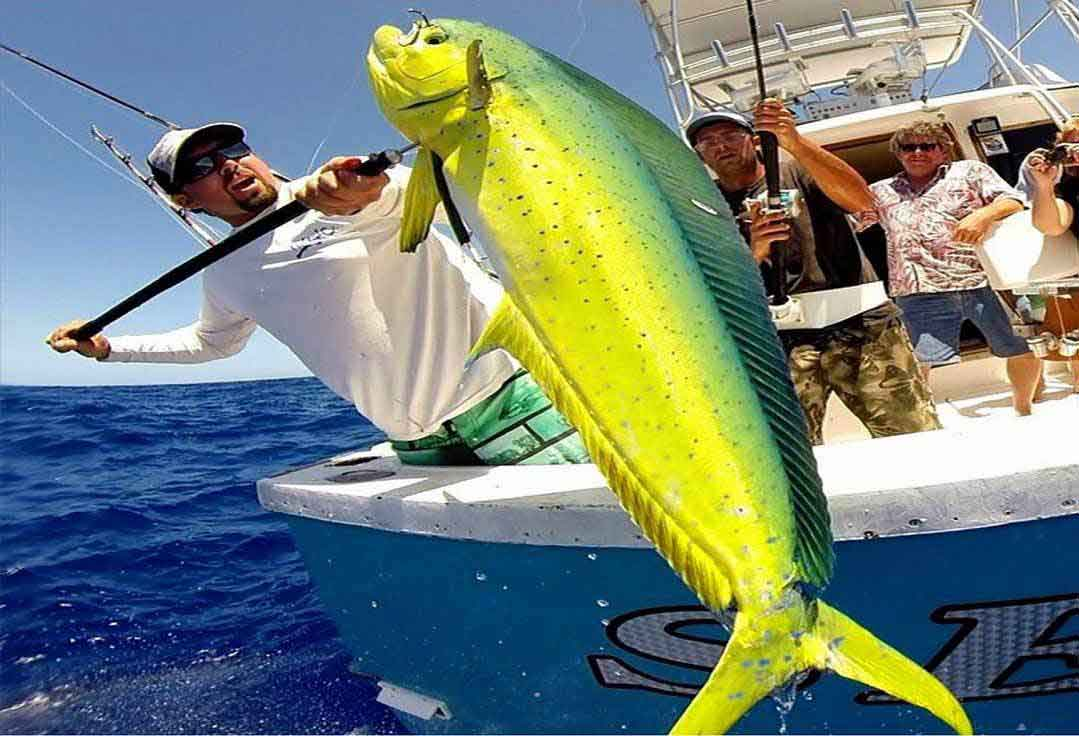 First mate gafs a mahi-mahi with key west deep sea fishing