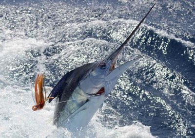 Marlin leaps during fight with Key West Fishing Charters
