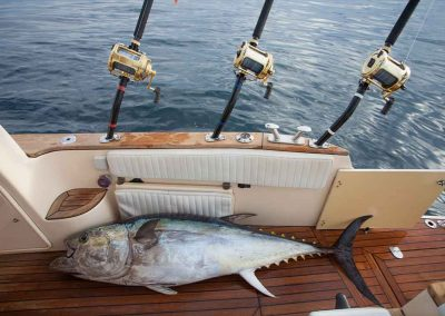 yellowfin tuna lays in boat with key west fishing charters