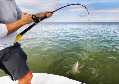 Man reels in lemon shark with key west flats fishing