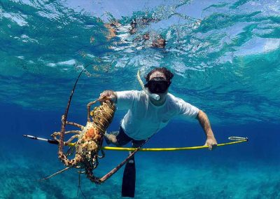 a man spears a lobster with Key West Lobstering Charters