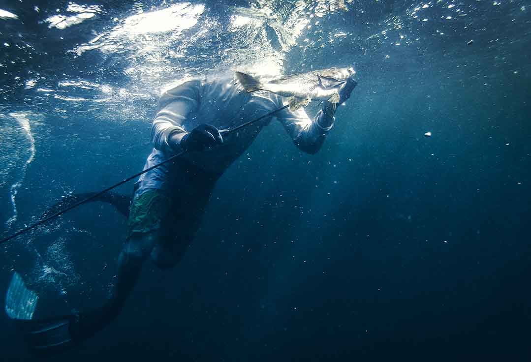 a man free dives with Key West Spearfishing Charter